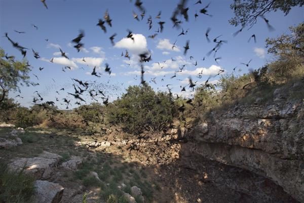 蝙蝠自身携带多种致命病毒为什么还能生存下去?