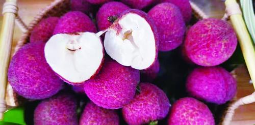 漳州本地无核荔枝本周上市 价格是普通荔枝的数倍