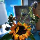 隨便種花可能會破壞風水 對整個家庭運勢都不好